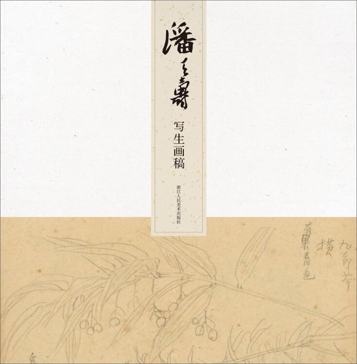 名师大家画稿精选:潘天寿写生画稿