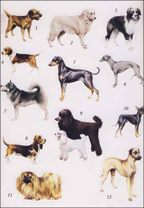 我的动物贴画小百科:狗
