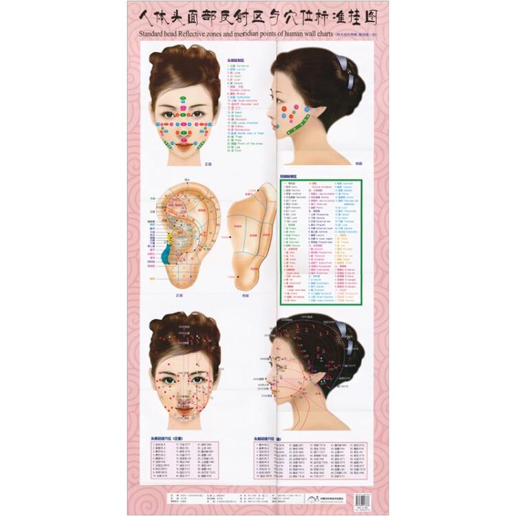 人体头部反射区与穴位标准挂图