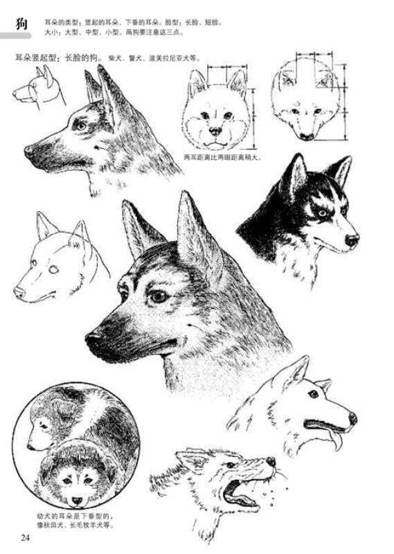 日本漫画手绘技法经典教程(11):动物的画法