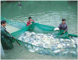 养鱼世界杂志社
