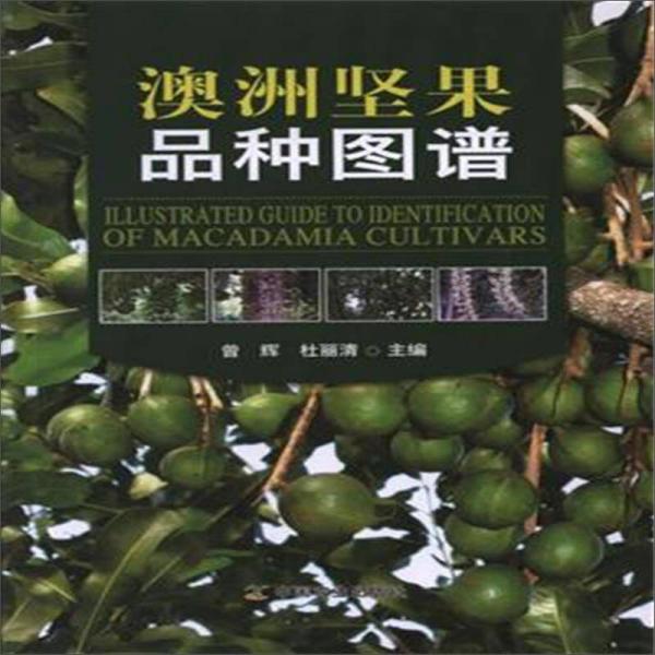 澳洲坚果品种图谱