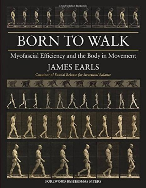Born to Walk  Myofascial Efficiency and the Body