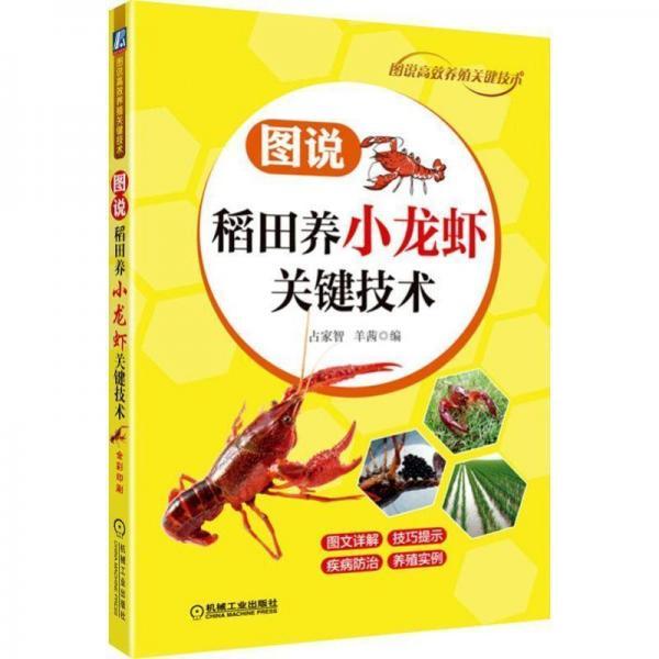 图说稻田养小龙虾关键技术