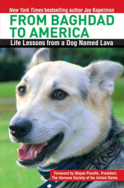 From Baghdad to America  Life Lessons from a Dog