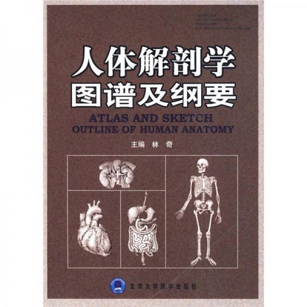 人体解剖学图谱及纲要