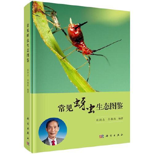 常见蚜虫生态图鉴