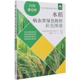 水稻旱育稀植及抛秧栽培技术